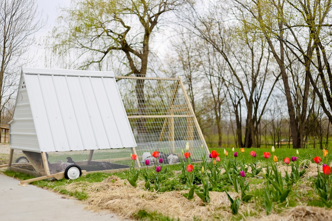 Beautiful mobile chicken tractor at Kelsey Jorissen Photography in Franklin, WI